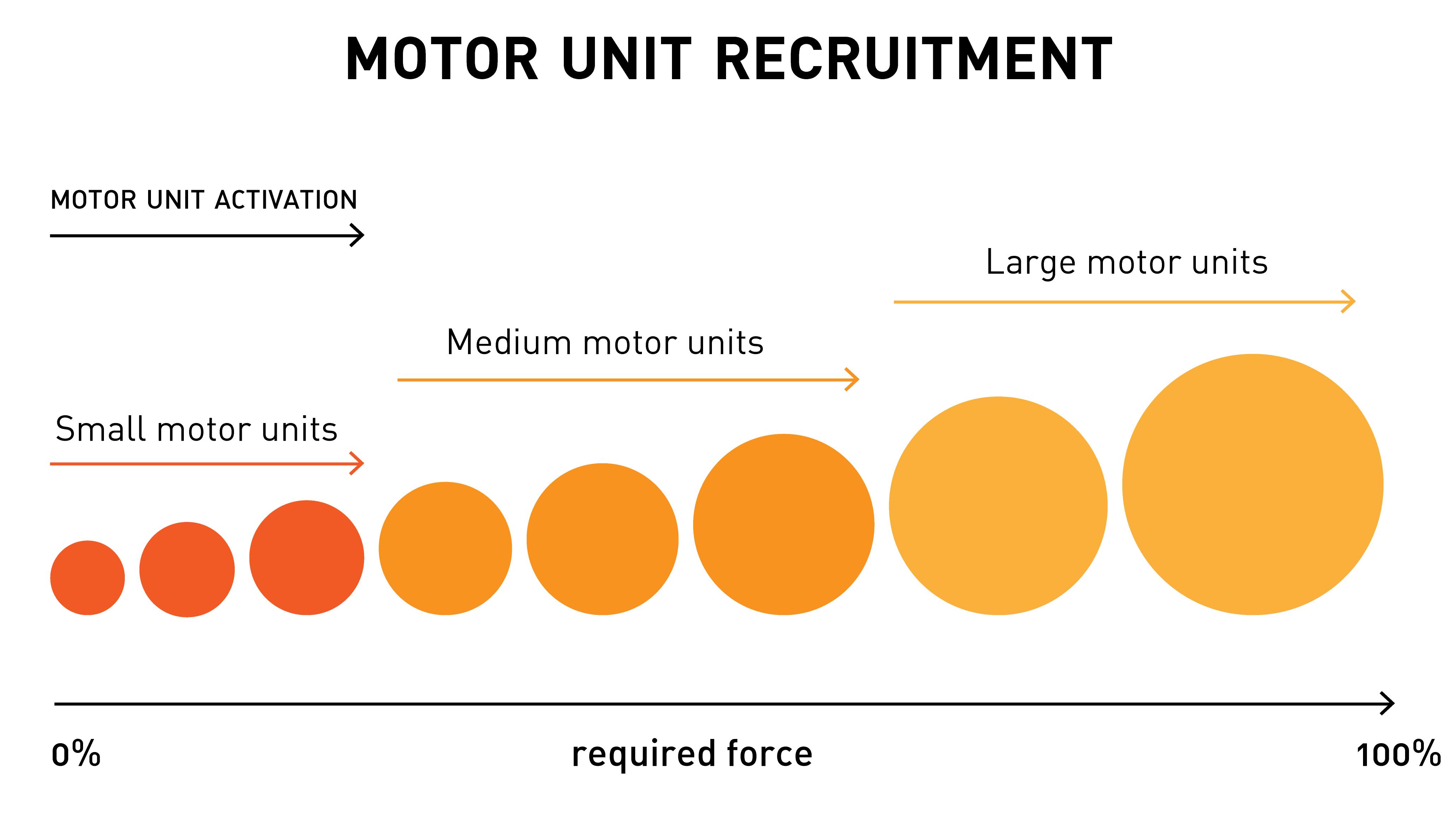 unità motorie